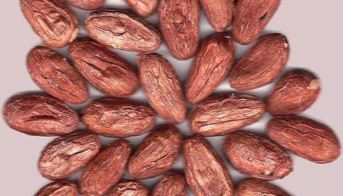 Chocolaterapia. Qué es, Tipos, Ventajas, Desventajas, Preparación 5